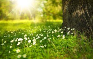 fond printemps
